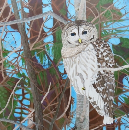 """How Blue Your Eyes Do Appear, Barred Owl"" / 36"" x 36"" / acrylic on canvas"