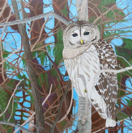 """How Blue Your Eyes Do Appear, Barred Owl"" / 36"" x 36"" / acrylic on canvas"